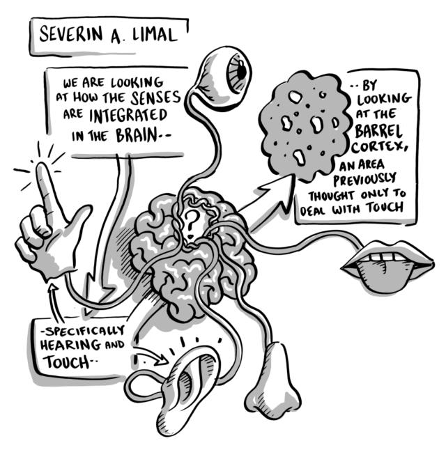 SeverinLimal.png