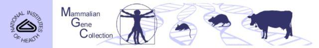 mgc-logo.jfif