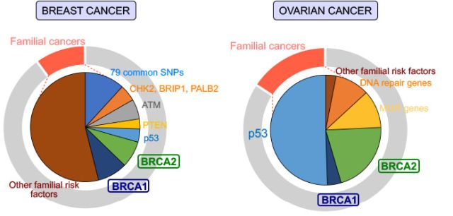 Figure 1 - graph showing breakdown of breast and ovarian cancers.jpg
