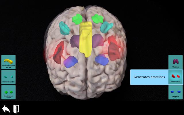 Insula cortex