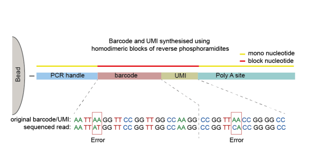 Error detection and correction in the barcode and UMI sequences