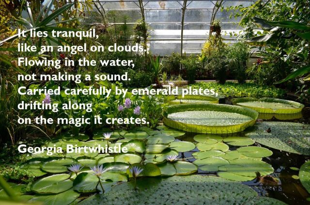 Giant lily pads with line from poem by Georgia Birtwhistle - see caption