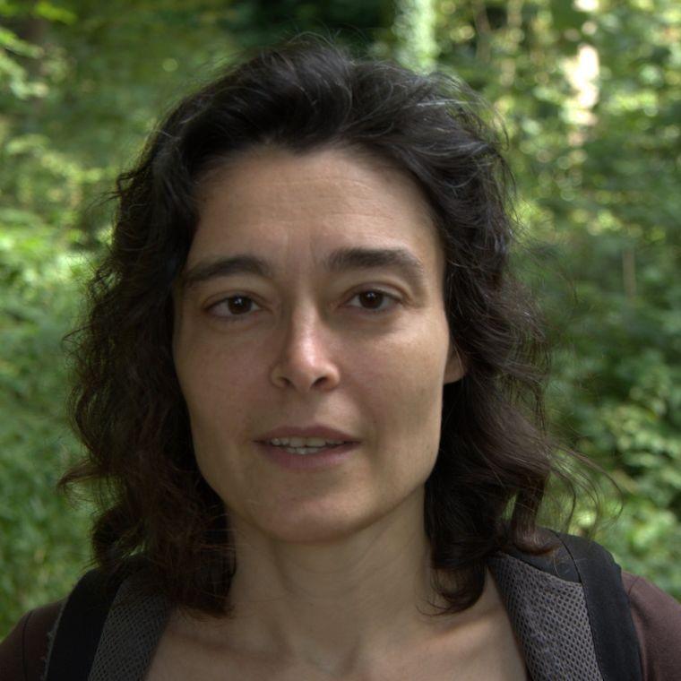 Mihaela duta