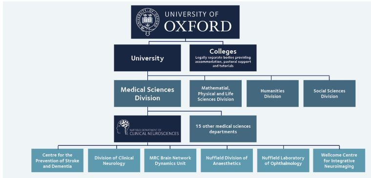 Diagram showing the hierarchical structure of the Medical Sciences Division and the departments within it