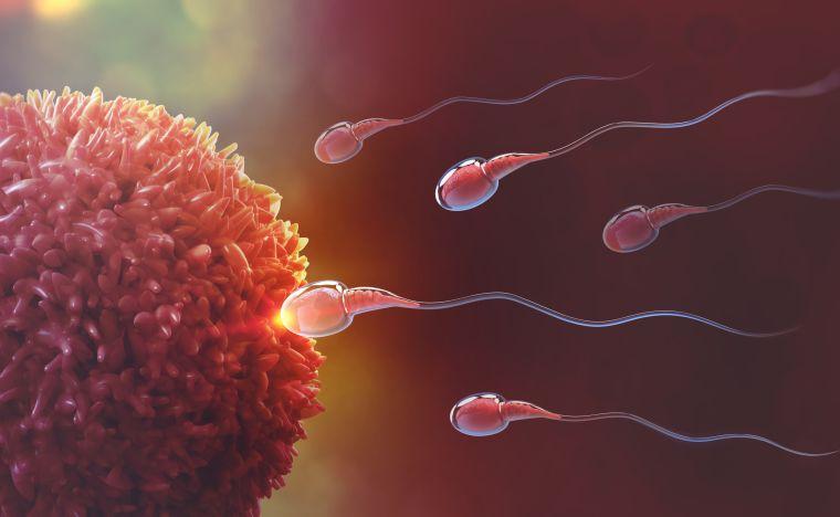 Reproductive medicine and genetics