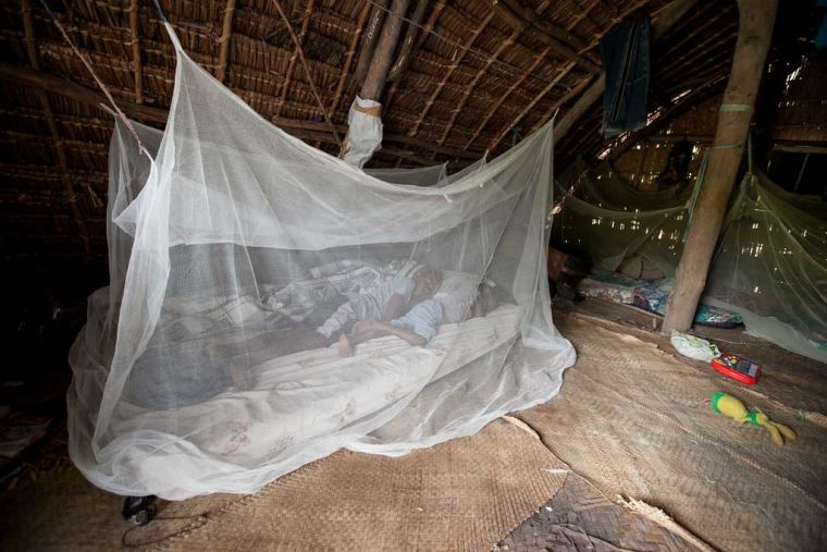 People in a mosquito nest