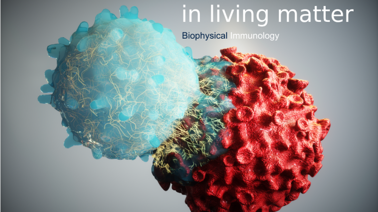 Primary research goal is the identification and characterisation of the mechanisms of mechanobiology controlling the immune response in health and disease. Our objectives involve the application and development of novel ultrasensitive live-cell microscopy techniques with the right spatiotemporal sensitivity as demanded by the biology. Long-term goal of our research is the translation of our expertise and methodologies in mechanobiology to mechanomedicine in diagnostics and treatment of patients.