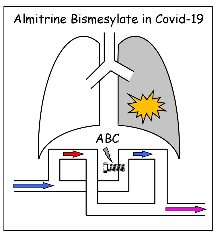 Cartoon of pair of lungs displaying how Almitrine Bismesylate operates in Covid-19. Arrows underneath show blood flow is blocked from entering diseased right hand lung.