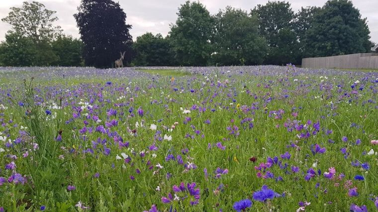 Image shows a Warneford Meadow's grass and flowers.