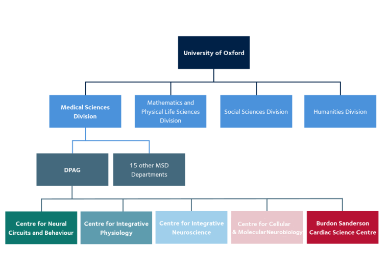 Flowchart showing University of Oxford comprises of four divisions (Medical Sciences, Mathematics and Physical Life Sciences, Social Sciences and Humanities), Medical Sciences has 16 departments including DPAG, which branches out to show the five centres of DPAG.