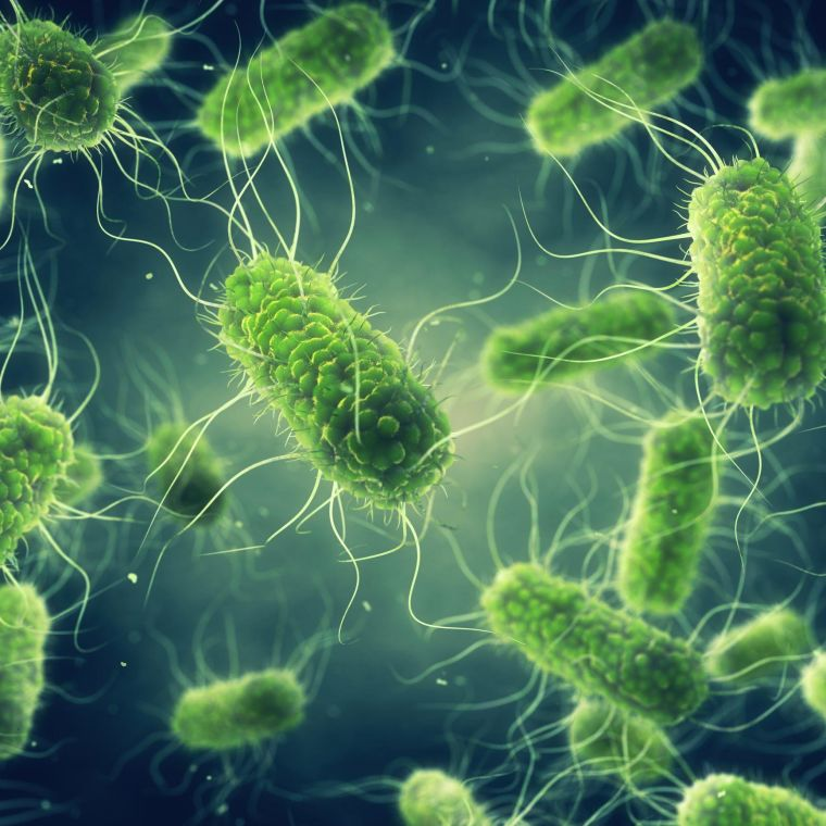 Salmonella 3D digital illustration of bacteria (green)