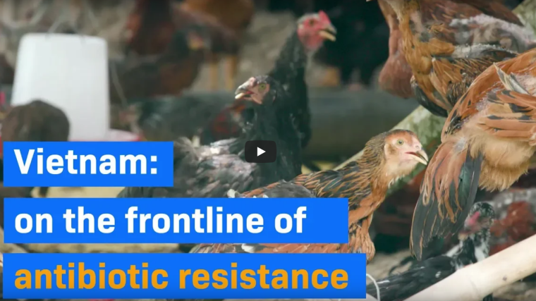 Vietnam: on the frontline of antibiotic resistance. Video explaining the ViPark project in Vietnam