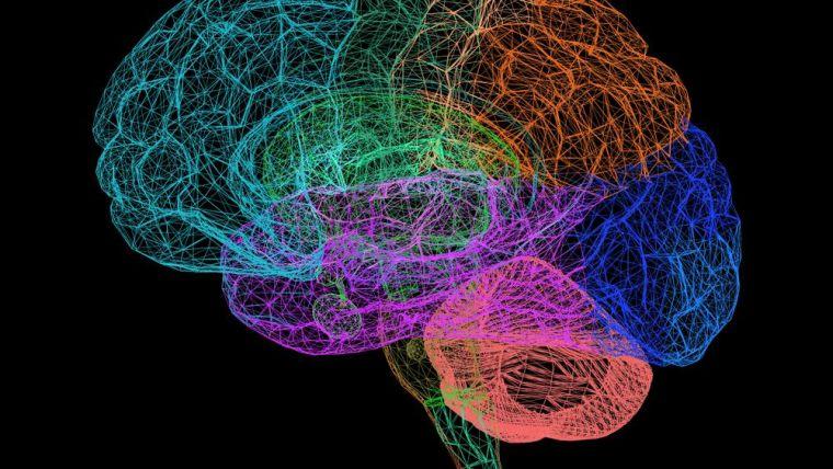 Image of multicoloured brain