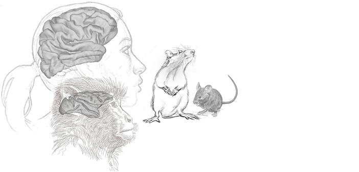 Neuroecology
