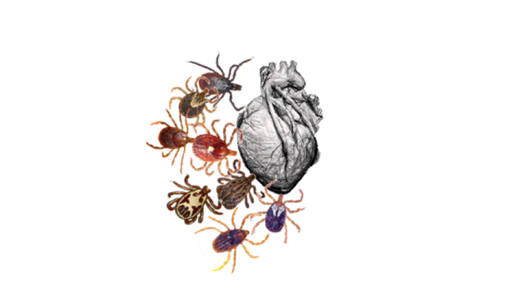 Image of insects and a human heart