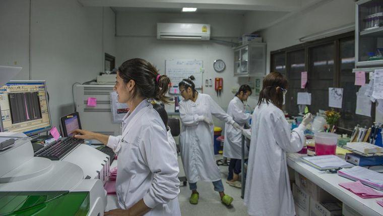 Growing failure of anti malaria drug treatment linked to parasite mutations