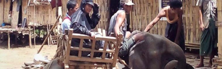 Three men on an elephant in a village in rural Myanmar
