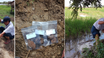 Composite photos of B. pseudomallei field study in Myanmar