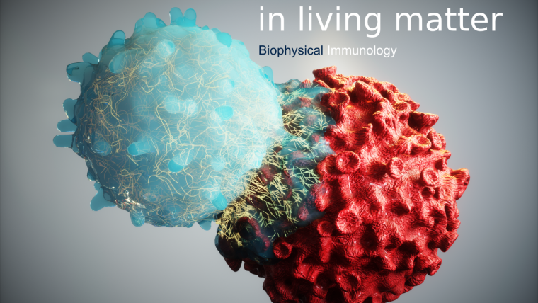 Biophysical Immunology header