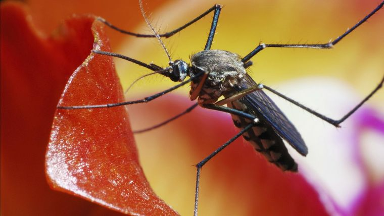 Commonwealth nations pledge ps2 7bn to halt deadly resurgence of malaria