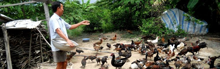 Researcher feeding birds