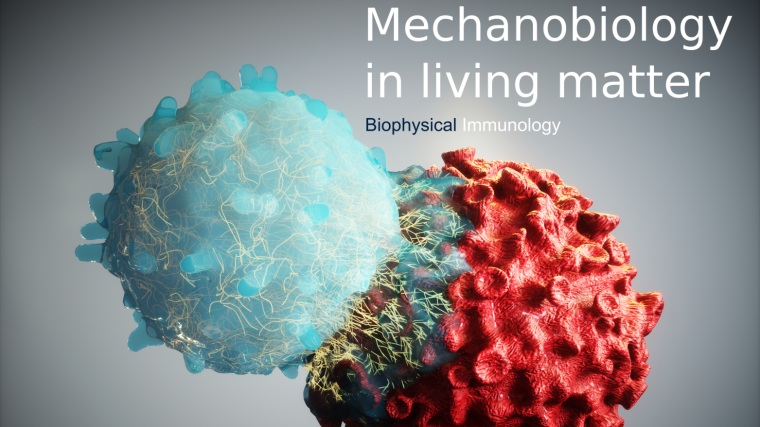 Biophysical Immunology header