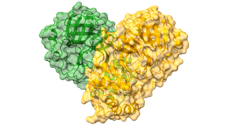 Structure of SARS-CoV-2 Main protease