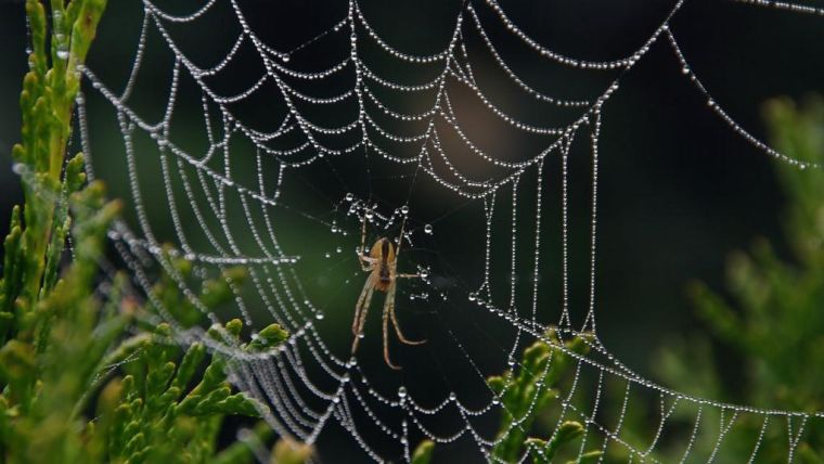 A spider at the centre of its web