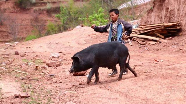 child with a pig