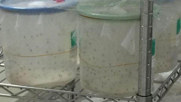 Dengue: Development of a universal T-cell vaccine against dengue virus infection