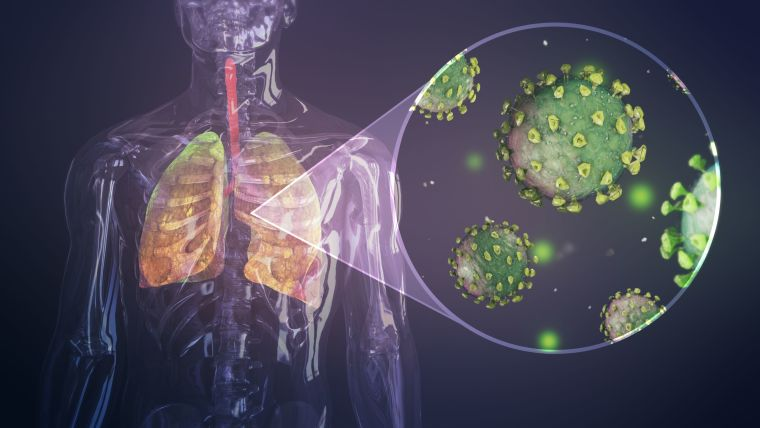 Digital illustration of a human with a transparent body and model of coloured lungs inside with coronavirus particle models.