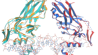 Structures of WT 6F58-6F59