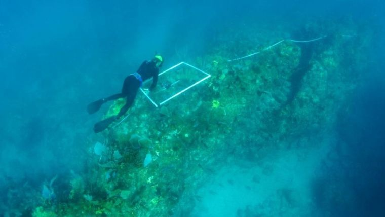 Surveying the reef for competitive interactions among organisms growing on hard surfaces.