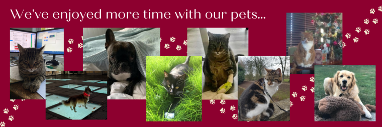 Montage of cat and dog photos
