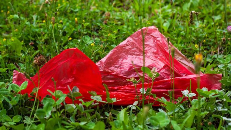 A plastic bag in a field of flowers