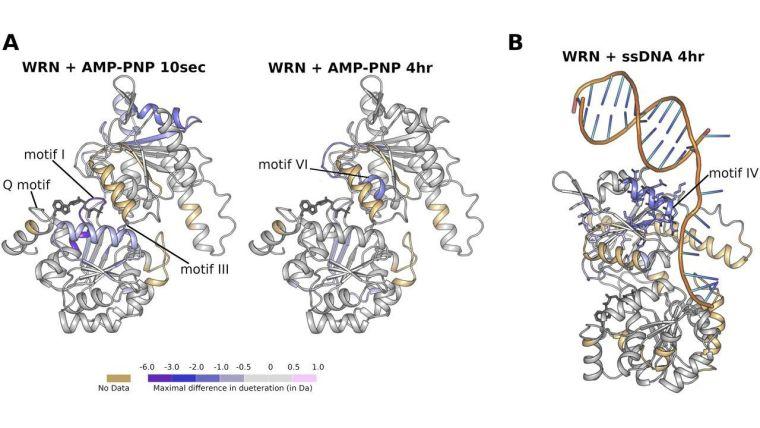 WRN Figure 6