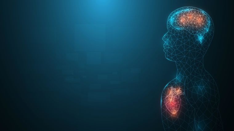 Human body with heart and brain highlighted