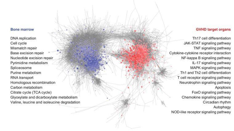 schematic image showing gene correlations