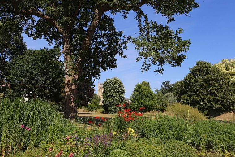 Shot taken of a bright summer's day in Merton College grounds showing trees, greenery and flowers