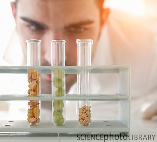 Man observing test tubes (Stock photo)