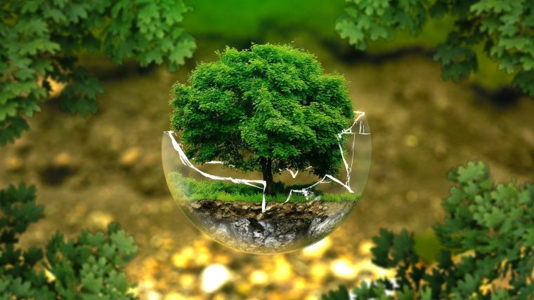 Graphic of a tree floating in a fragile bubble