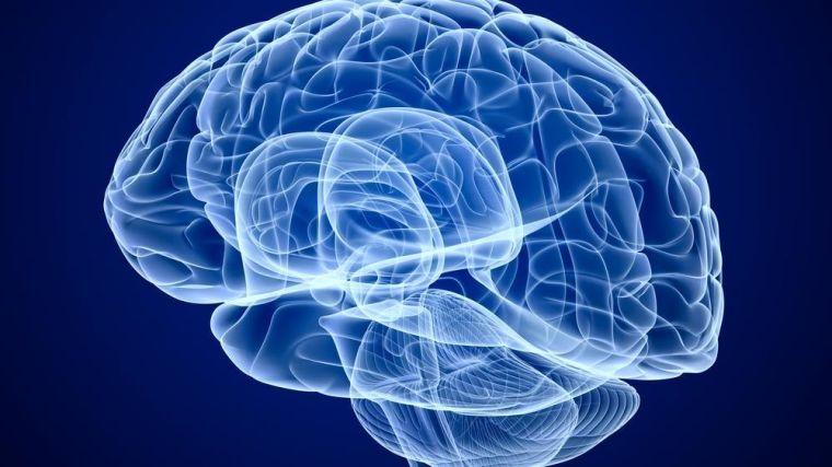 Shutterstock - Alex Mit brain
