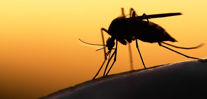 image of mosquito on human skin