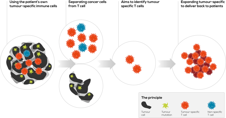Singula Bio T Cells