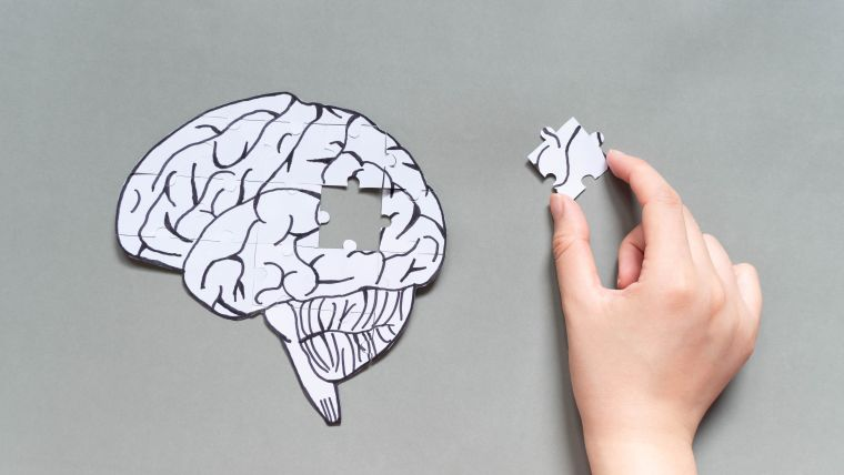 A jigsaw puzzle of the human brain