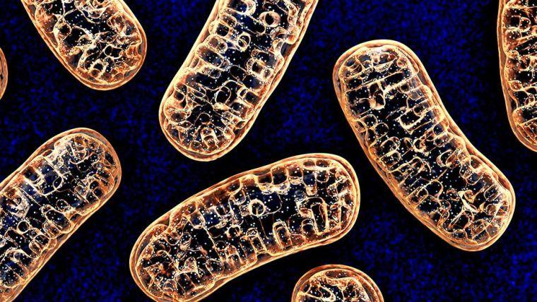 Clarke Group | Metabolism and Immunity