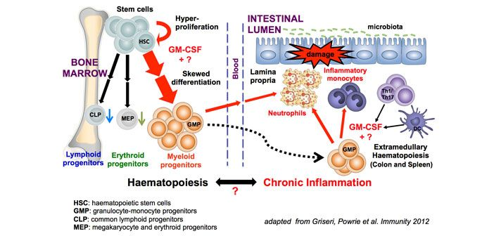 Griseri group haematopoiesis and chronic inflammation
