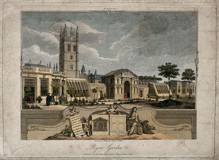 Painting of the Oxford Botanic Garden with Merton College and Chapel in the background