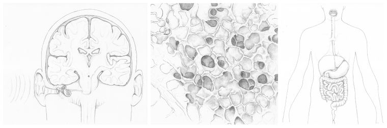 Drawings of the human head (showing the brain and sound waves coming from the ear), lung aveoli, and the human digestive system.