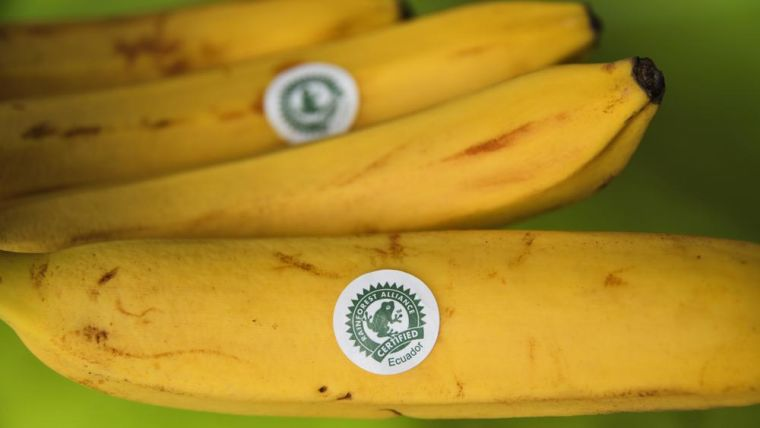 "Bananas with eco-friendly ""rainforest alliance certified"" label"